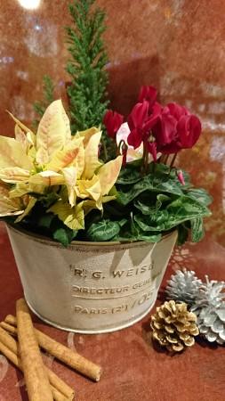 冬のお花たち シナモンと松ぼっくりを添えて