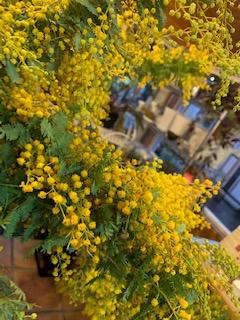 こちらは黄色が鮮やかなミモザ!どちらも春が待ち遠しくなるお花です。