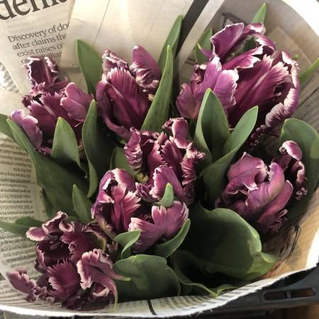 花弁がひらひらとして豪華さのある「パロット咲き」