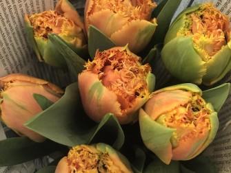 「八重咲き」×「フリンジ咲き」