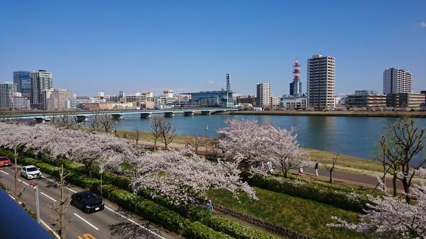 4月の桜景色。