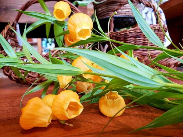 金魚鉢にも似たかわいらしいお花です!