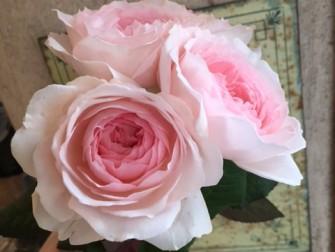 香りの良いバラ