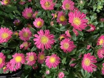 お墓参りのお花もお仏壇に供えるお花もご用意してお待ち致しております!