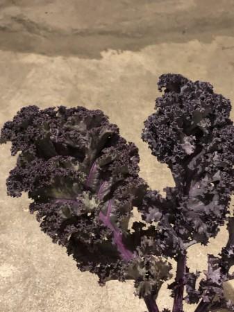 ケール 野菜の仲間のケール。シックな色合いとひらひらのフリルが特徴。