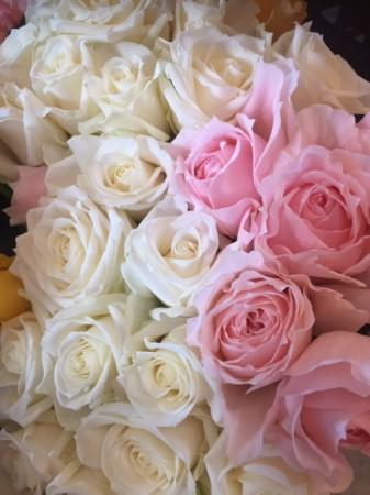 今年初入荷のバラ