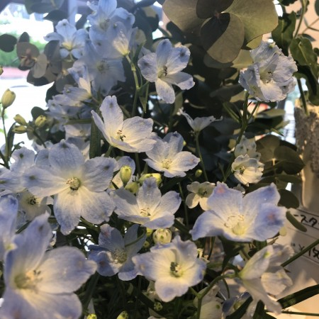 デルフィニウム ふわふわの水色が入ることで花束などは一気に春らしくなります。