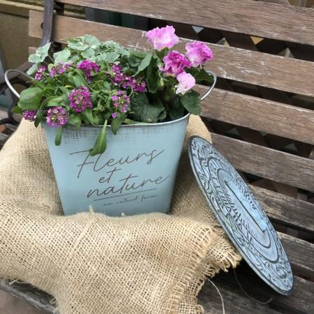 26日(日)のインドアガーデニングレッスンでは、プリムラ・アリッサム・グレコマを使って、キャンディーボックスをイメージした寄せ植えをつくりました。