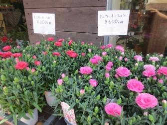 ミニカーネーション ¥600(税別)